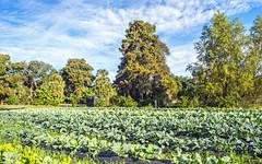 Gro Dat Farms