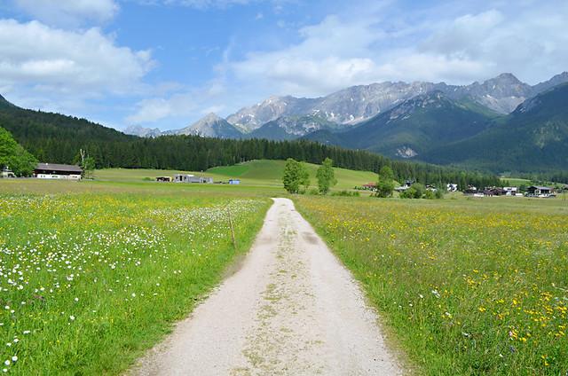 Grassy meadows, Leutasch, Tyrol, Austria
