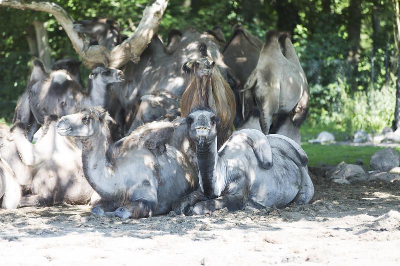 Knuthenborg safaripark!