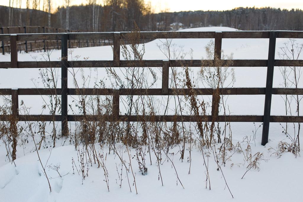 Ян_травы зимой
