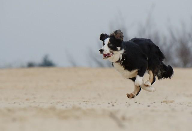 running-dog-747751_1280