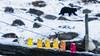 Goldbären-Ausflug zu ihren lebenden Verwandten by CappyFoto