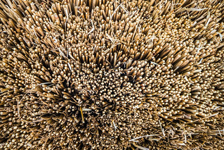 Image of Shirakawa-go. sel1018 shirakawago sony1018mmf456 a6300 fingertips gasso roof straw thatch trypophobia 白川村 白川郷 ōnogun gifuken japan exif:isospeed=1000 camera:make=sony geo:country=japan exif:make=sony geo:state=gifuken exif:model=ilce6300 exif:focallength=18mm exif:aperture=ƒ50 camera:model=ilce6300 exif:lens=e1018mmf4oss geo:lon=1369075 geo:location=ōnogun geo:city=ōnogun geo:lat=362575