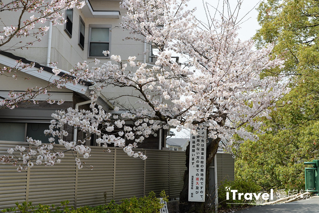 《京都赏樱景点》山科疏水陌上樱花开,享受晨光洒落的静谧美景。