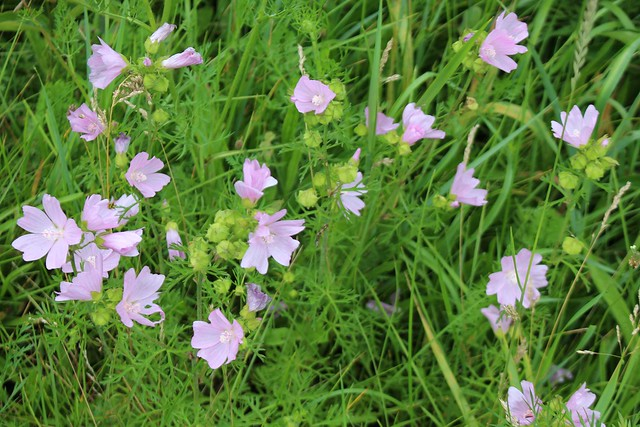 wildflowers-roadside-ditch