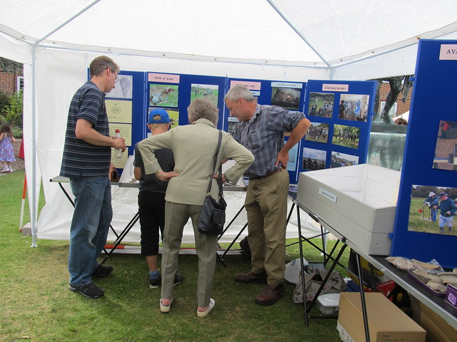 AVAS at Salisbury Museum Festival of Archaeology 2015