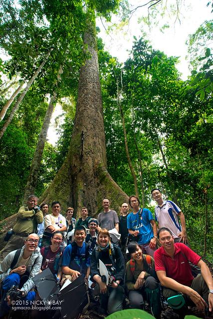 World's tallest tropical tree (Shorea faguetiana) - DSC_4877