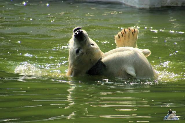 Tierpark Berlin 18.07.2015 033
