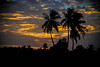 coconut trees at dusk