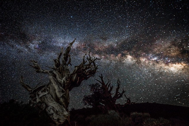 The California Milky Way in the White Mountains! Long Exposure Astro Photography Milkyway Ancient Bristlecone Pine Forest Dr. Elliot McGucken Fine Art Photography