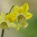 Sunshine from my Garden 02 by smilla4