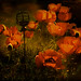 Magic Poppies by Mara ~earth light~