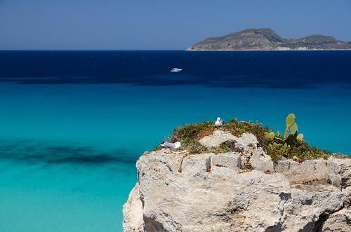 blue sea island nikon mare blu seagull sicily sicilia gabbiano isola favignana egadi levanzo calarossa