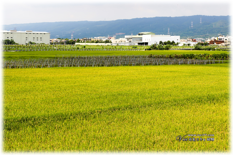 0606田中尋米309