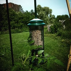 Newest addition to the garden: a bird feeder. I've already had to fill it up several times since buying it about a week ago.
