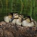 All My Ducks in a Row by Sara Turner Photography