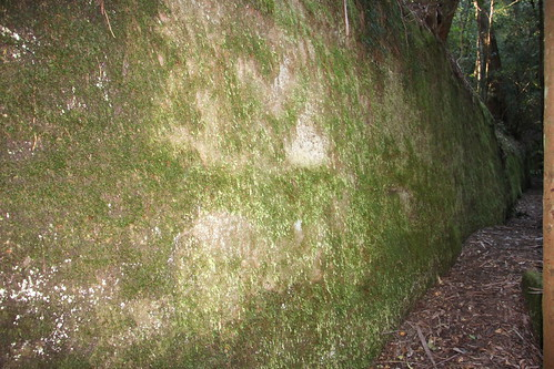 The Mossy Wall