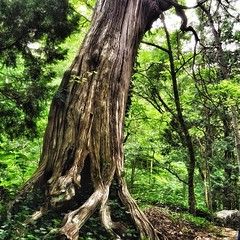 There is magick in this world and it lives in the woods. The trees are alive and they speak to us. Listen.