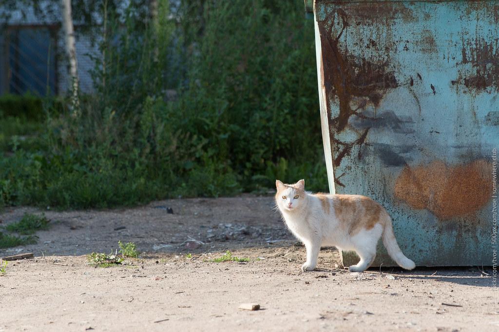 Кошка у помойки в Юрьеве-Польском