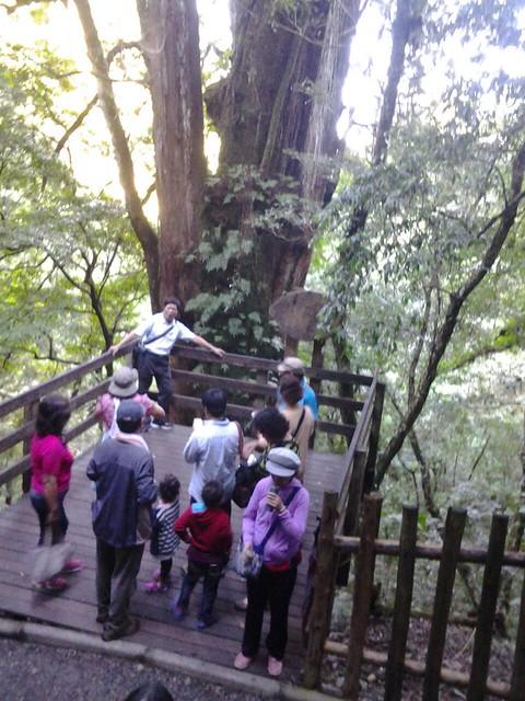 16066拉拉山巨木群