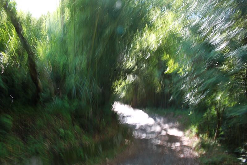 環島-新竹上帝部落-司馬庫斯隨拍 (32)