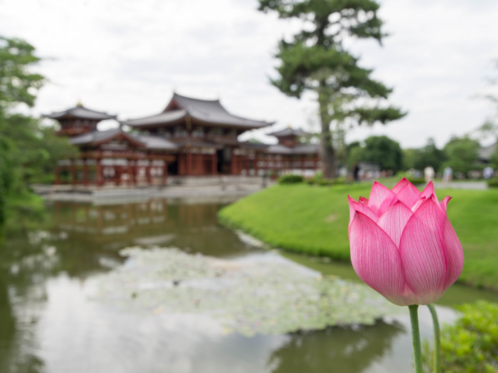 Kyoto Travel㊱