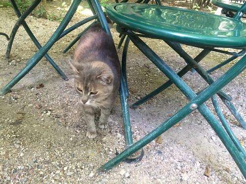 Cat at Versailles