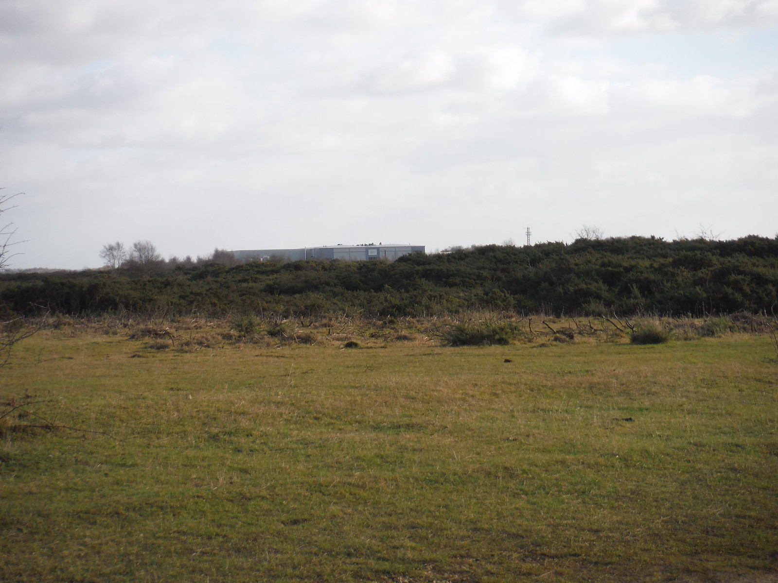 Greenham Common SWC Walk 34 Newbury Racecourse to Woolhampton (Midgham Station)