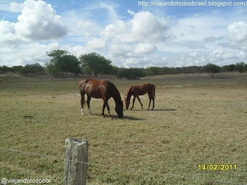 Carneiros - Cavalos