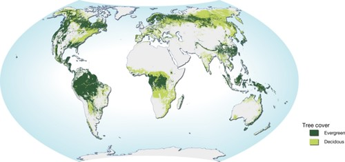 Worksheet. World map of forest distribution Natural resources  forests