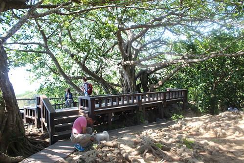 為減少踩踏造成野生物的傷害,壽山籌備處架起木製平台。山友不遵守規定執意帶狗上山,行政人員只能勸導。