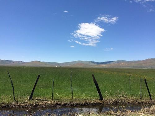 flowers mountains green water field grass clouds tuscarora cowboy nevada meadows wildflowers