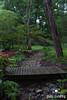 Twilight at Wood Hollow