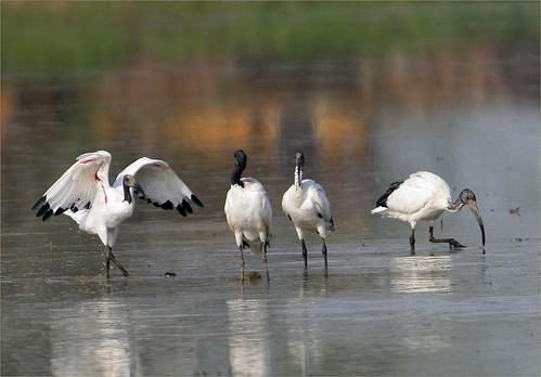 24, 06,15,  '' ibis '' 197