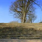 Preston steps