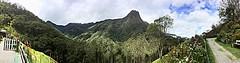 Finca la Montaña, bosque del cócora