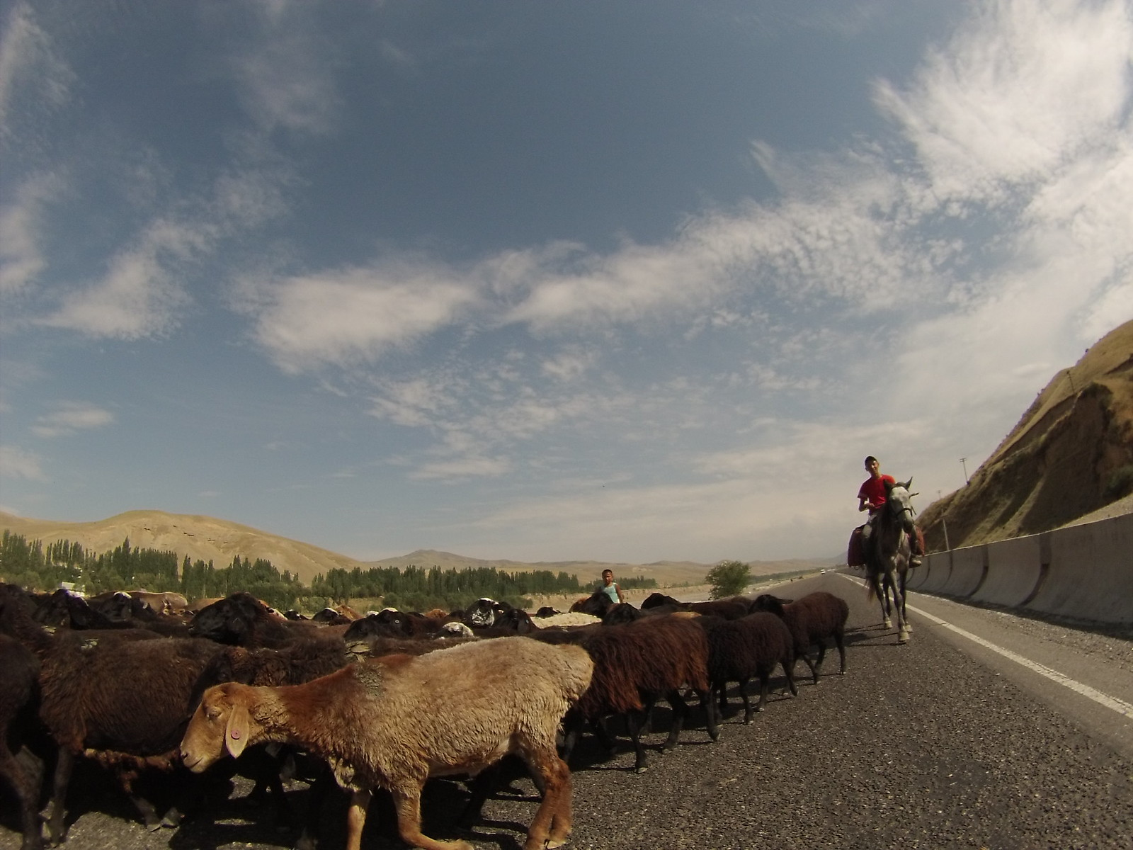 Sheeps on the road in Kyrgyzstan
