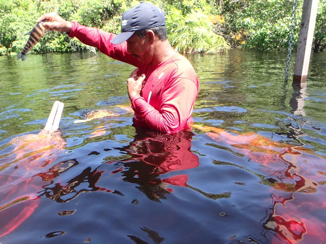 Petting River Dolphins near Manaus, Brazil
