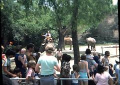 San Antonio Zoo - 1975