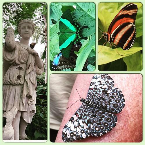 Butterflies! #hayleyssweetadventure #niagarafalls