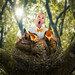 The bird choir by John Wilhelm is a photoholic