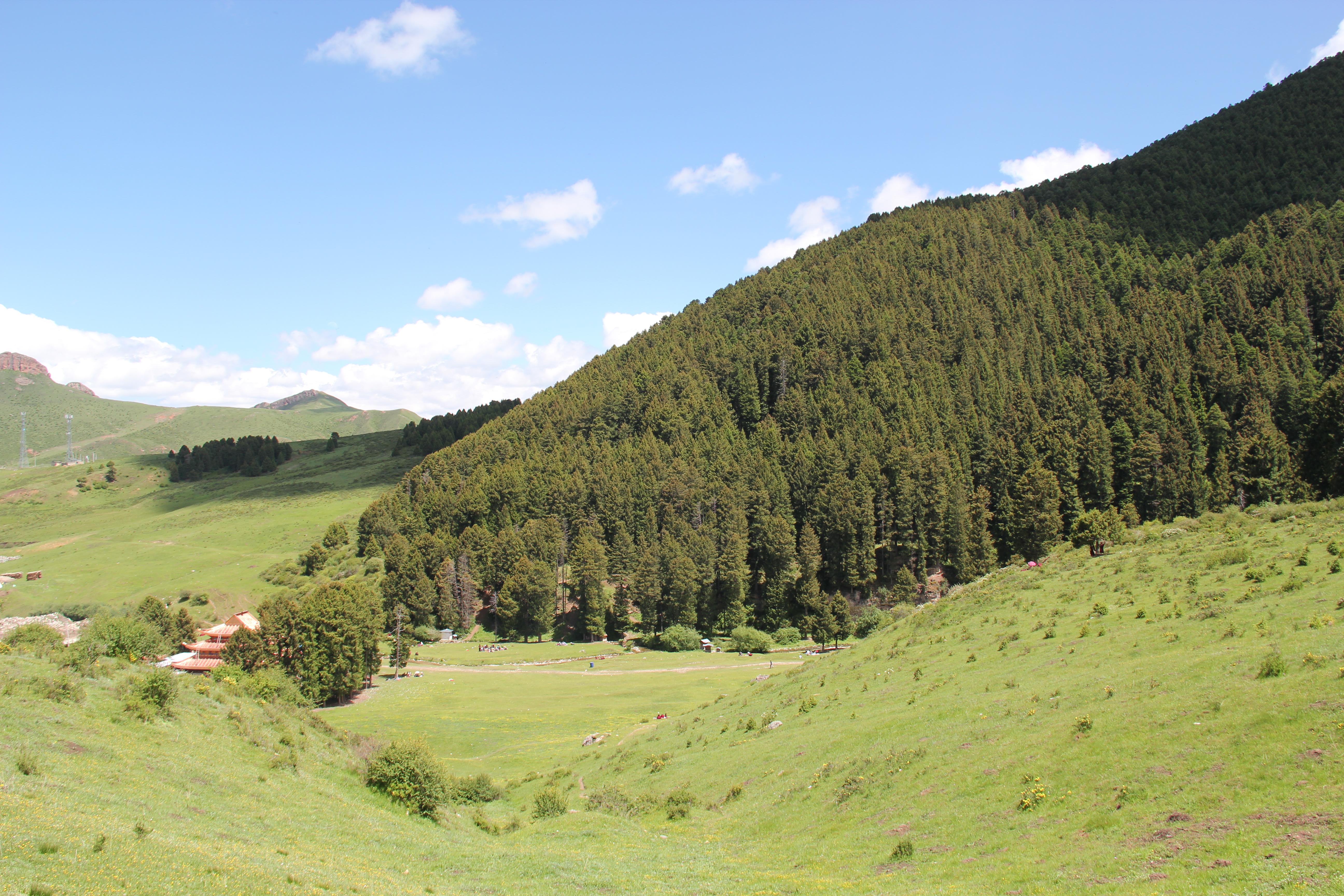印度泰姬陵白色大理石由于受到污染变成黄绿色