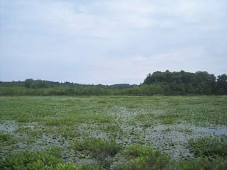 Clayville Pond