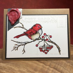Stampendous Snow Bird & Stampin Up Postcard