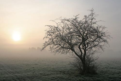 mist tree sunrise geotagged stourbridgecommon geolat5221993 geolon015696