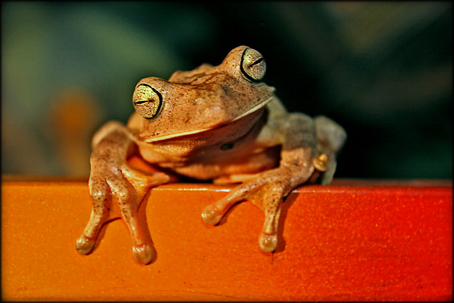 Did someone say S.M.U.G. Frog?