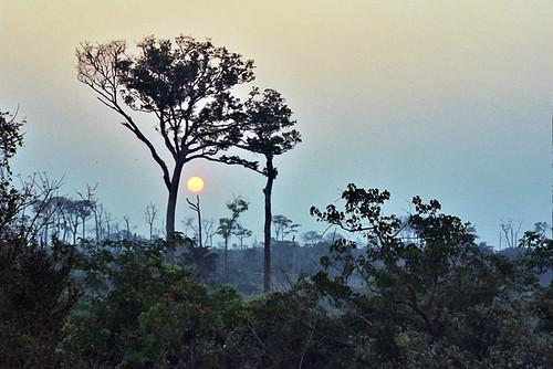 africa rainforest bangui centralafricanrepublic bayanga richardfranco