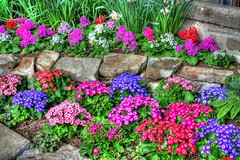 HDR flowerbed