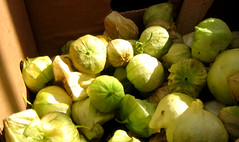 cruciferous vegetables(0.0), leaf vegetable(0.0), brussels sprout(0.0), gourd(0.0), vegetable(1.0), produce(1.0), food(1.0), tomatillo(1.0),