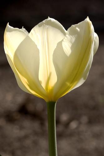 Spring Flower 4.2.06